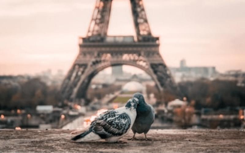 鳥がキスしている画像